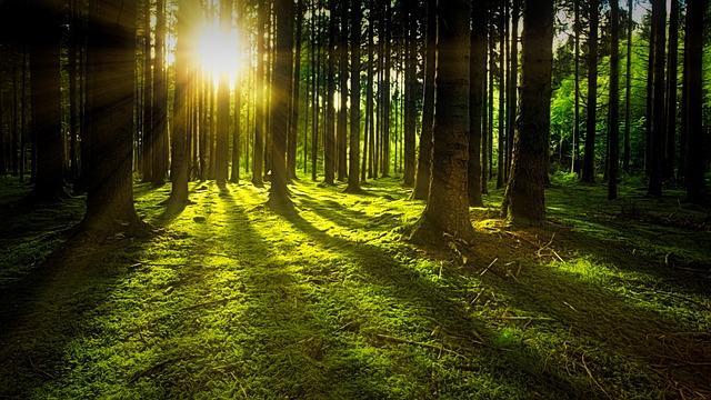 Kaunis metsä